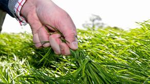 Superior Grass & Fodder Crops 2018