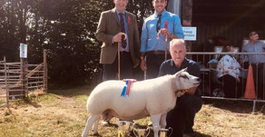 Chipping Show Interbreed Sheep Championship