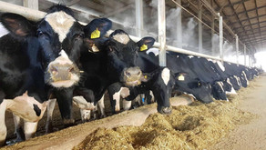 "Join our next Zoom meeting ""Optimising Profit per Cow Space""...."
