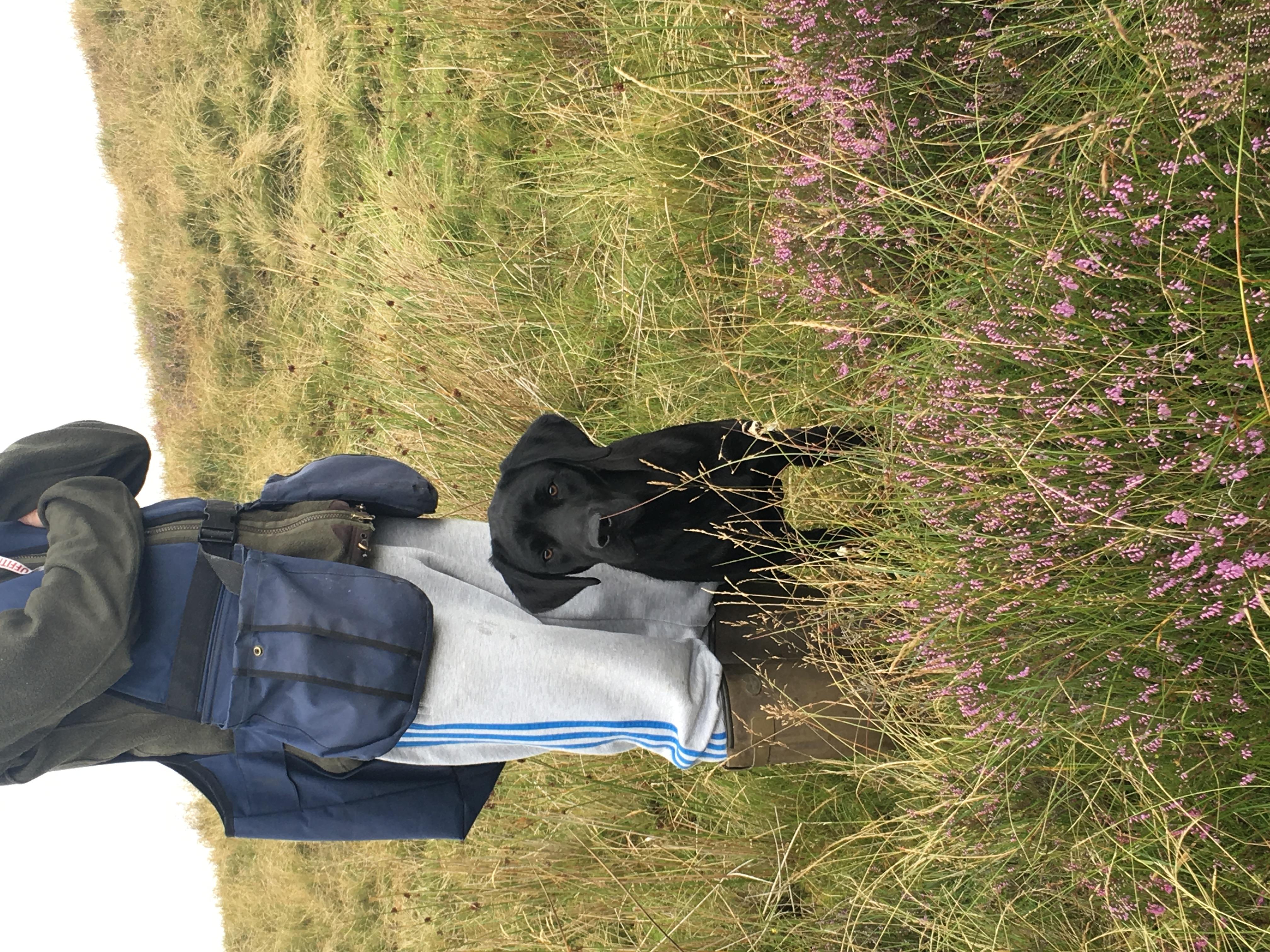 Gundog Training, Lancashire