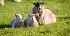 Come and visit us at NSA North Sheep on Wednesday...