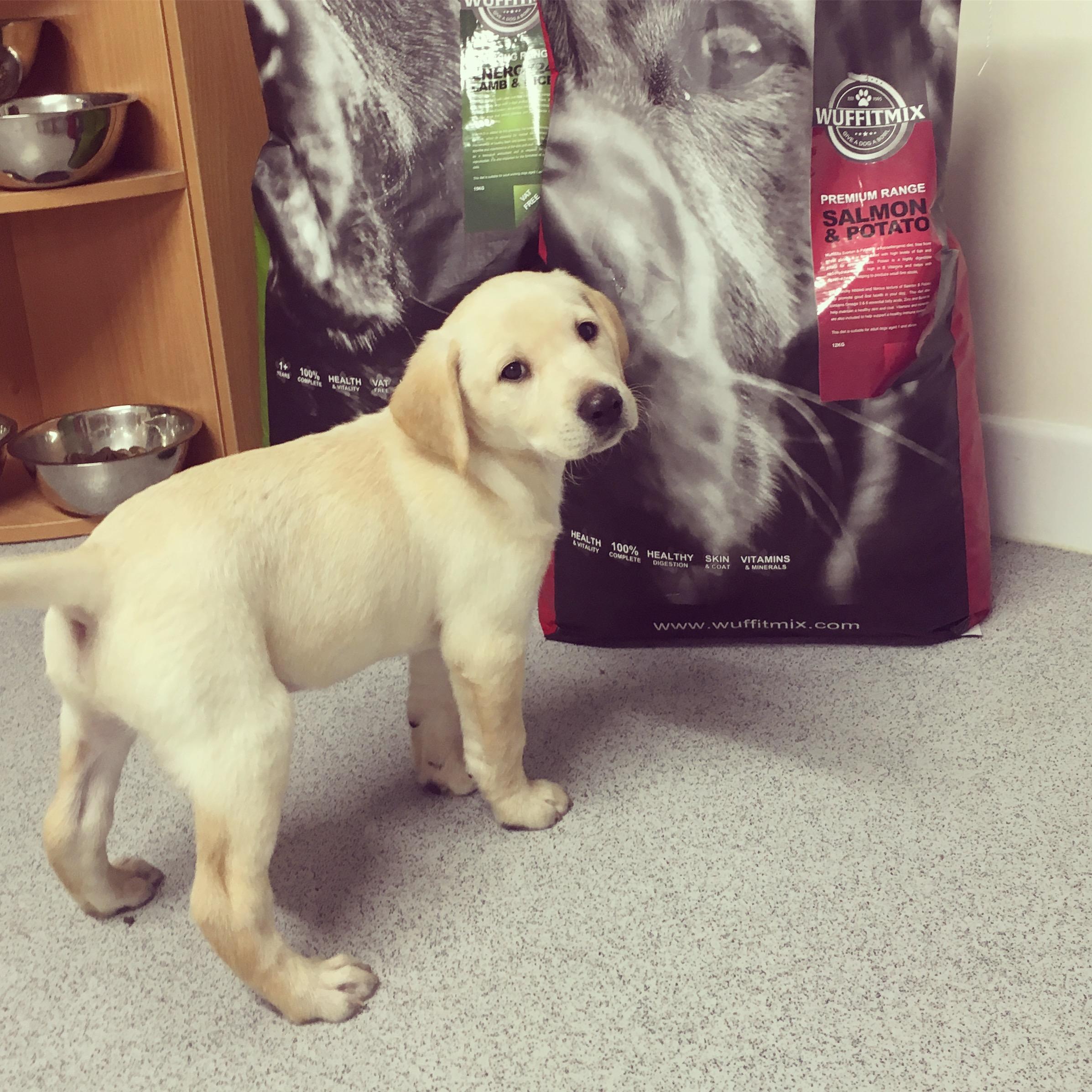 Breamsdown Benjamin as a pup