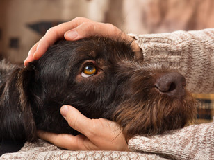 5 Ways To Show Your Dog That You Love Them ❤🐶