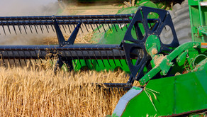 Ration alkalisation switch has cut feed costs by half...