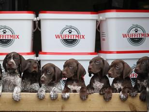 The WuffitMix Breeders Scheme 🐾