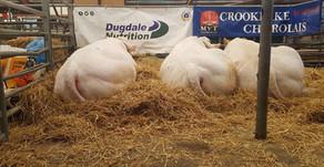 DN Sales Specialist, David Miller, sells his pedigree bulls to Orkney...
