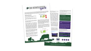 DN Newsletter - Issue 06