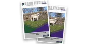 DN Tech Brief; Lamb Feeding Guide