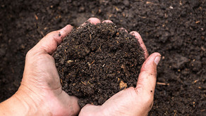 Did you know that we provide a soil sampling service?
