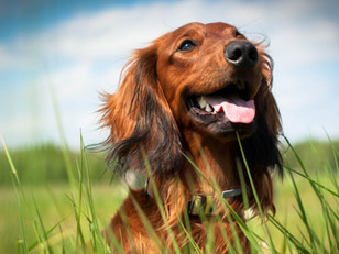 Make your dogs healthcare a priority with WuffitMix...