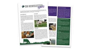 DN Newsletter - Issue 10