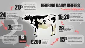 Calf & Heifer Rearing