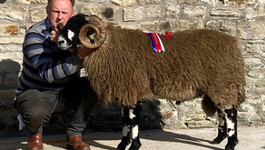 Dalesbred Sheep Breeders Association 89th Annual Show & Sale of Aged Rams, Shearling Rams & Ram Lamb