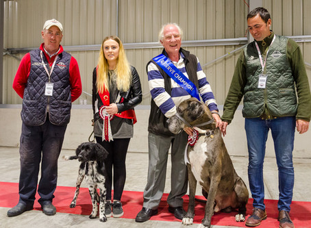 Judging at the WuffitMix Open Day & Fun Dog Event...