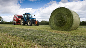 Silage Review