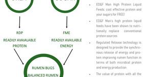 ED&F Man: Your liquid options