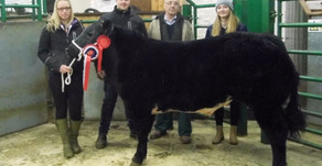 Prize Show & Sale at Kirkby Stephen Auction