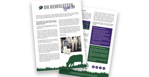 DN Newsletter - Issue 04