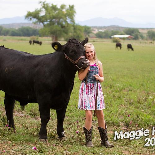 La Plata Cattle