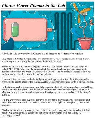 Flower Power Article.jpg