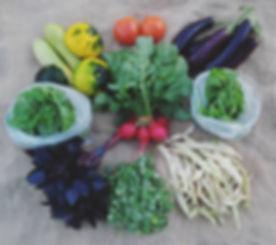 #CSA week 15 - Eggplant, tomatoes, summe