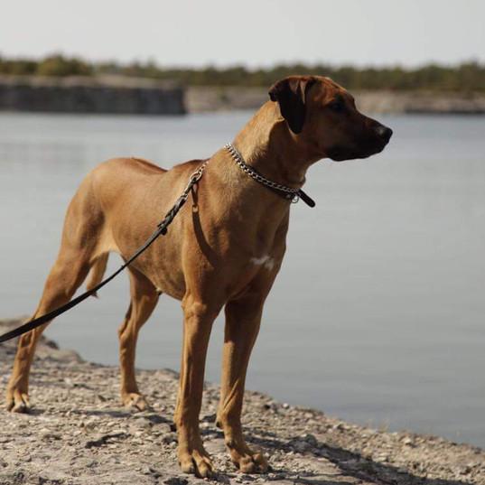 Gina unghund