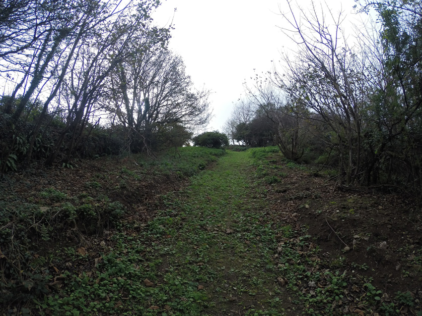 Path to the three acres of woodland