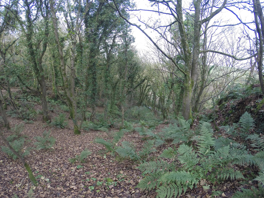 Three acres of woodland