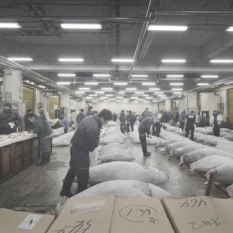 Tsukiji Market (2015), Tokyo