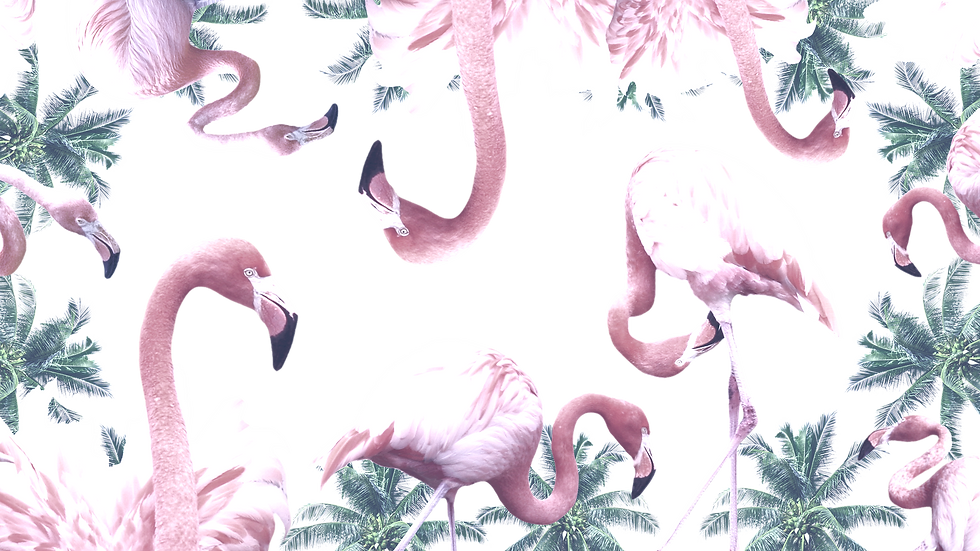 Flamingo stand out from crowd