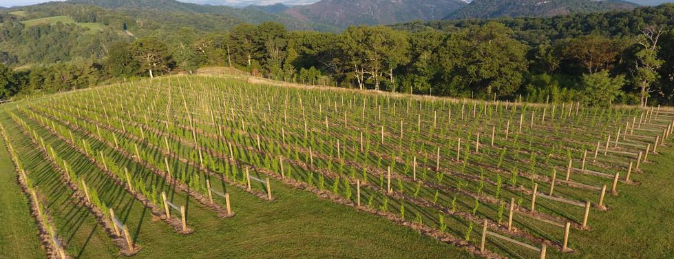 Vines Overhead.JPG