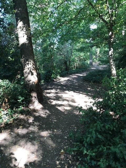 SHRNF treescape.jpg