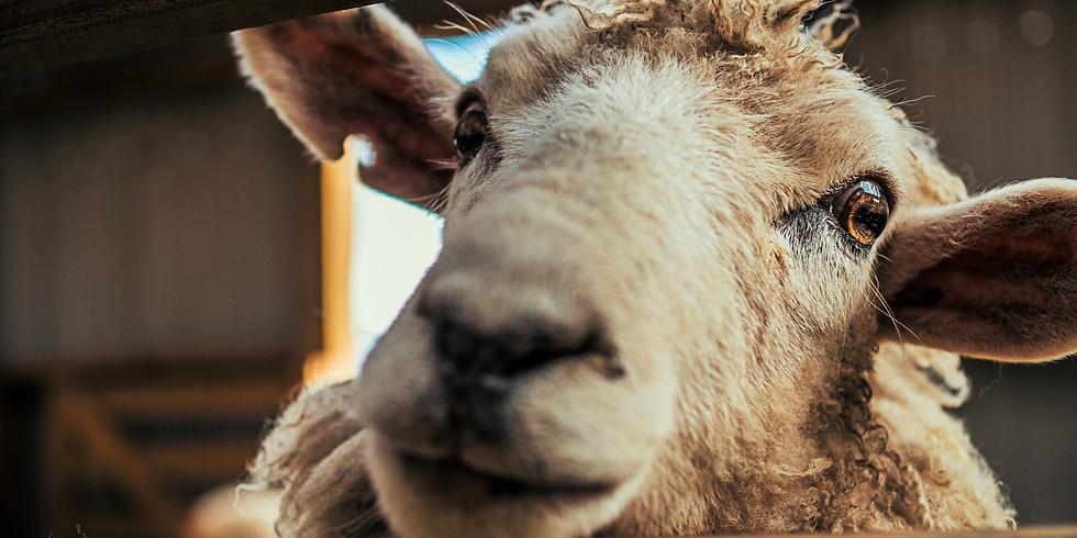 Fachwissen Schafe - Modul 1