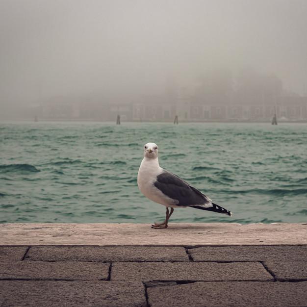 Venice Segull