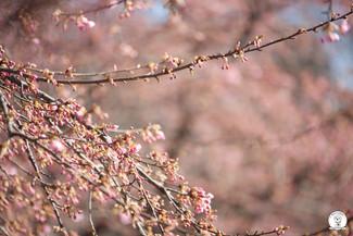 もうすぐそこに春が