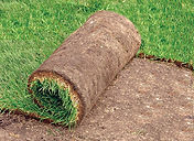roll of sod, small roll,sod farm, laying sod