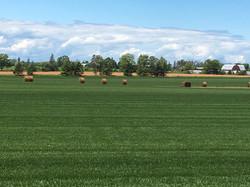 Sod Field