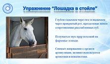 Лошадка.jpg
