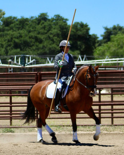 Prince of Peace, Region 2 Novice horse 6