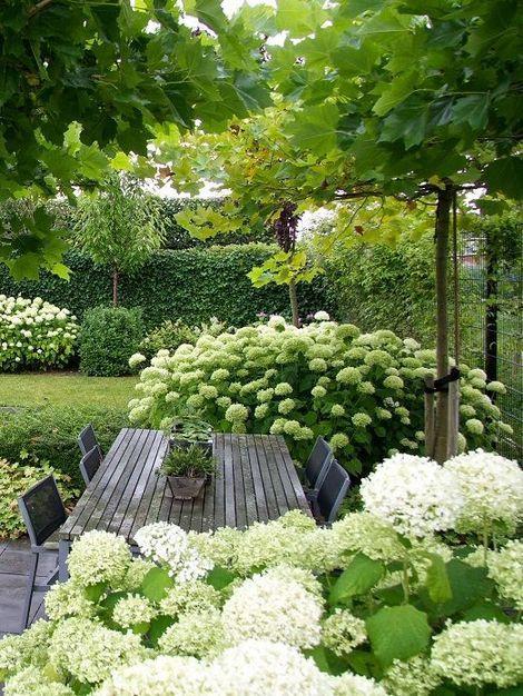 hortenzije niso samo v modri barvi, prečudoviti kremnato zeleni cvetovi ustvarijo svežino