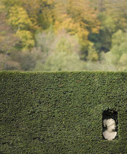 strižena tisa (Taxus baccata) je stalnica na formalnih vrtovih