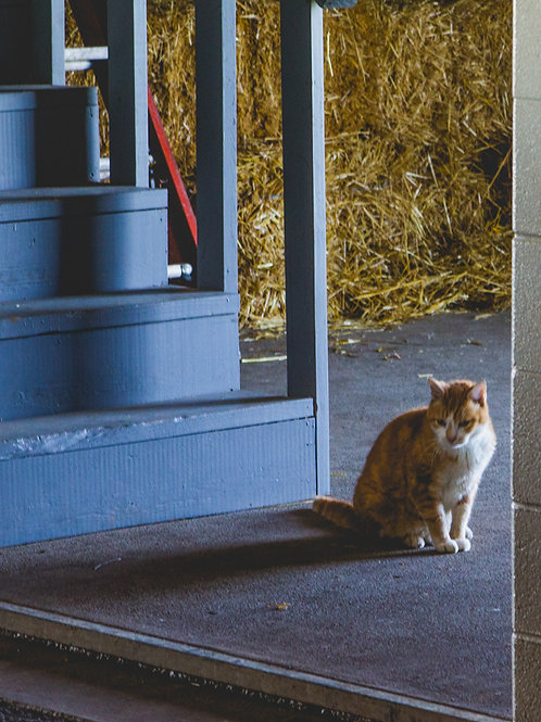 One of the hosts at Sun Valley Farm