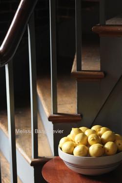 Bowl of Lemons at Shaker Village