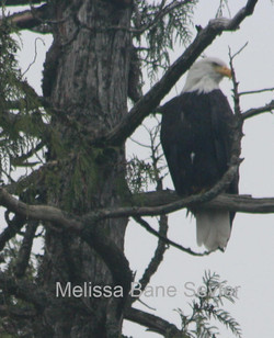 Eagle Roost 2