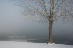 Tree in Ice Fog