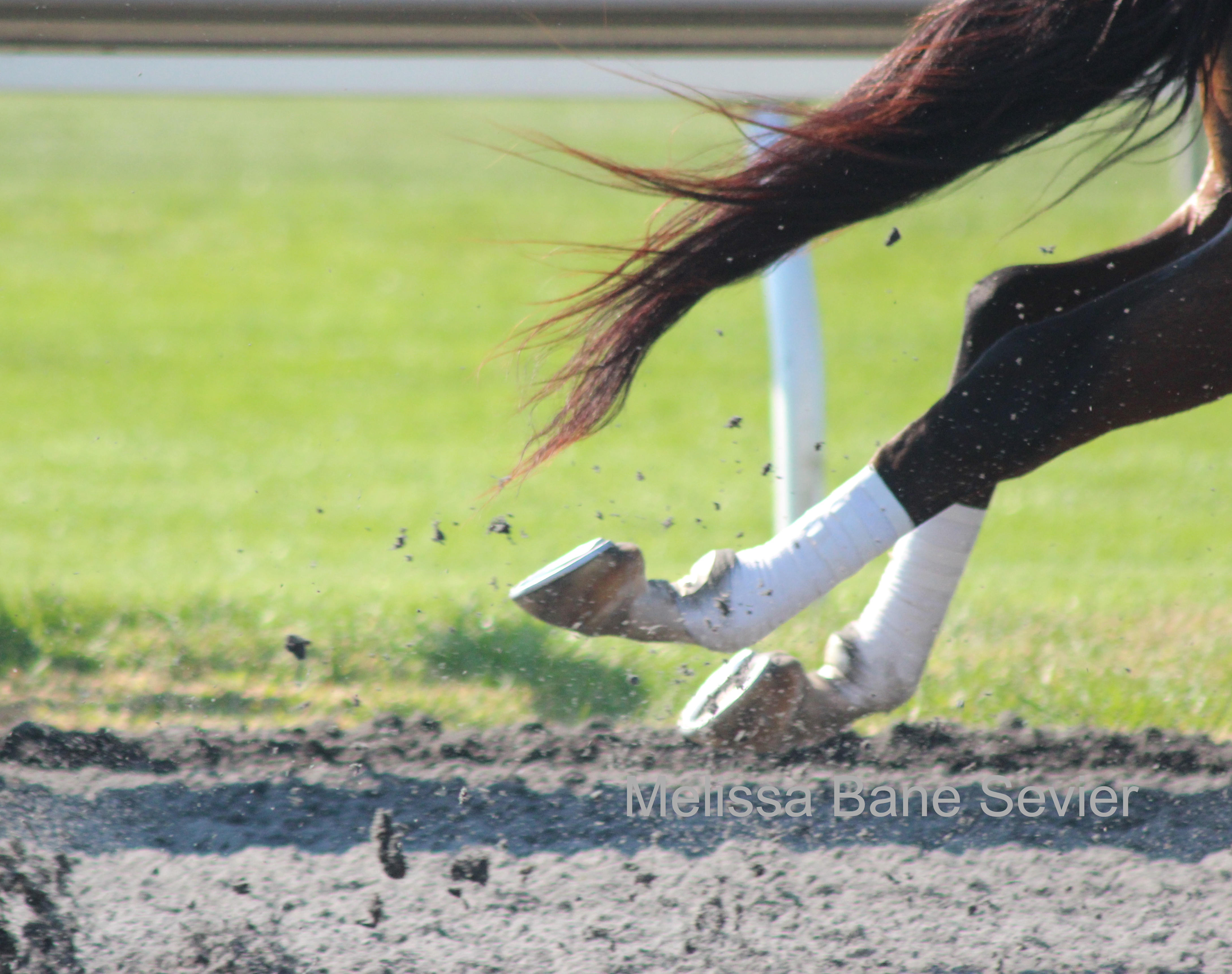 Running Free at Keeneland