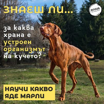 Месоядни VS Тревопасни! Ползи от хранене на кучета по метода БАРФ