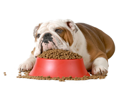 Истината за преработената (гранулирана) храна за кучета!