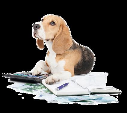 beagle-paperwork-calculator-istock-Vivie