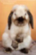Tarifs photos animaux de compagnies Studio Bourgoin